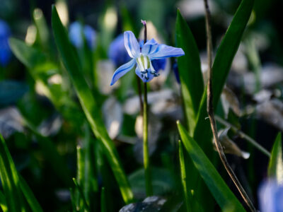 207: Nu blommar det (71/183)