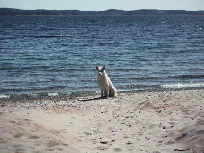 236: På stranden (80/365)