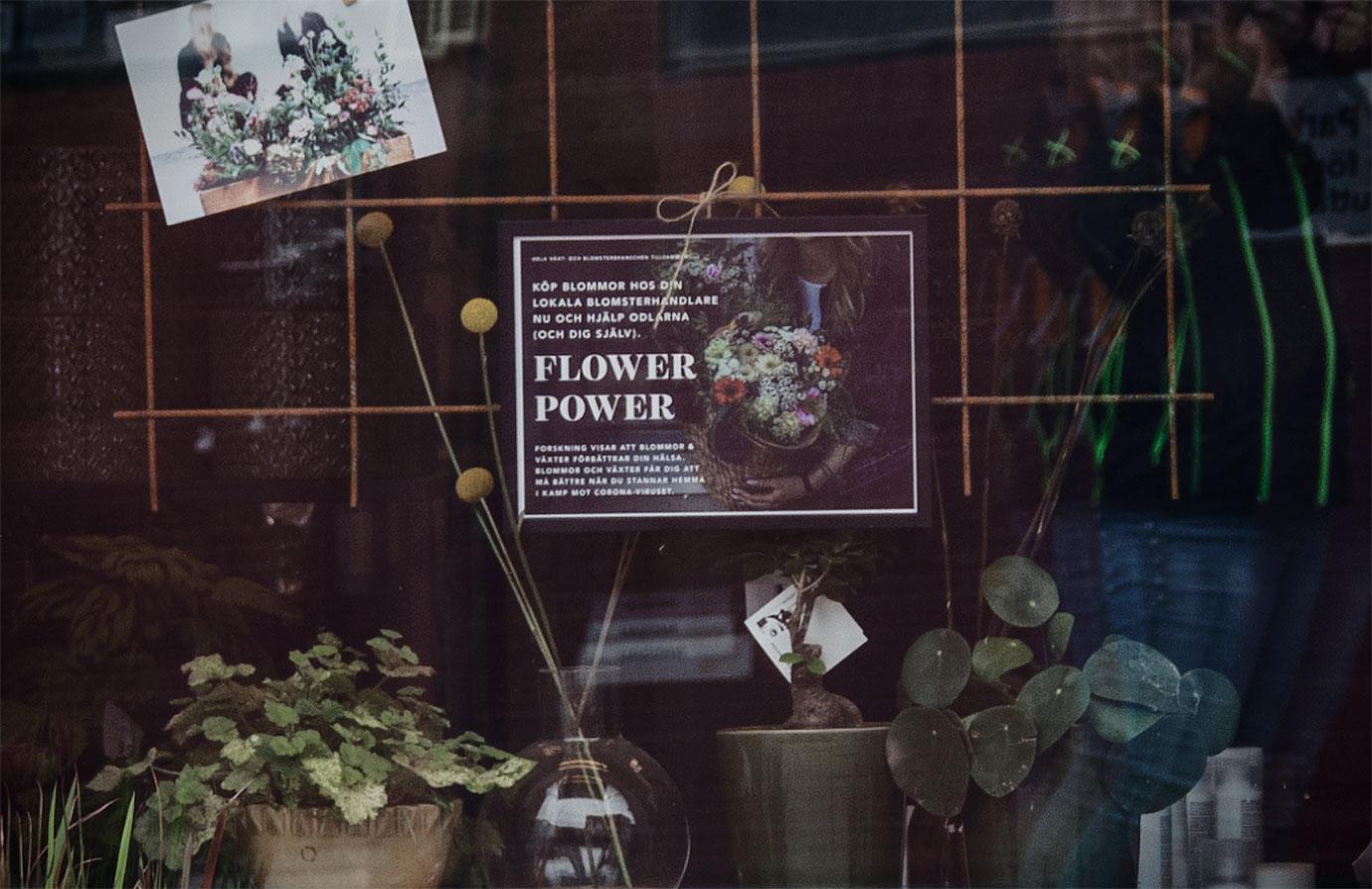 81: Flower power (90/183)