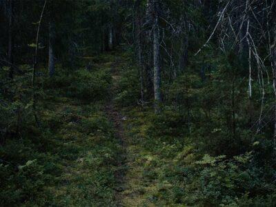 118: I den mörka skogen (107/183)
