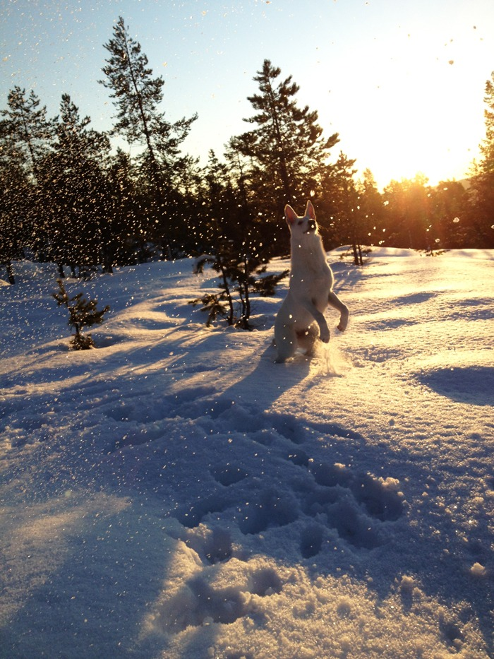Snöflingor i motljus