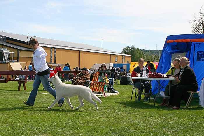 SKK nationell hundutställning i Vännäs 2012