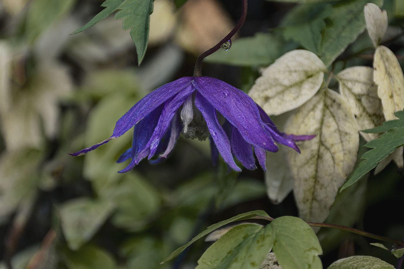 114: Höstens sista blomma (115/183)